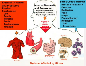 Stress-Graphic-resized-600.jpg