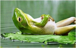 frog+Relax