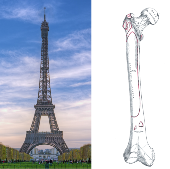 eiffel-tower-bone-660x656