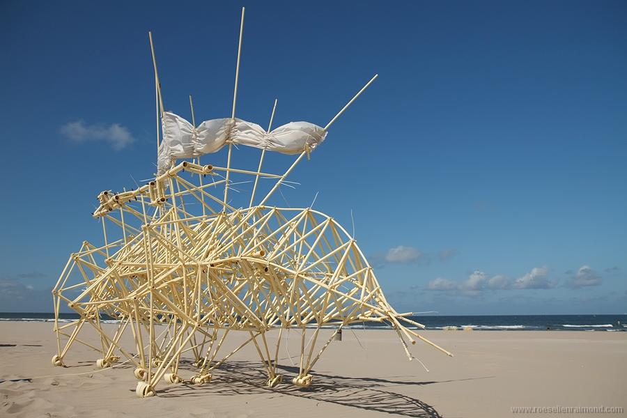 Beach Dynamics
